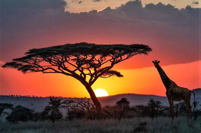 Танзанія – перлина Чорного континенту + Занзібар