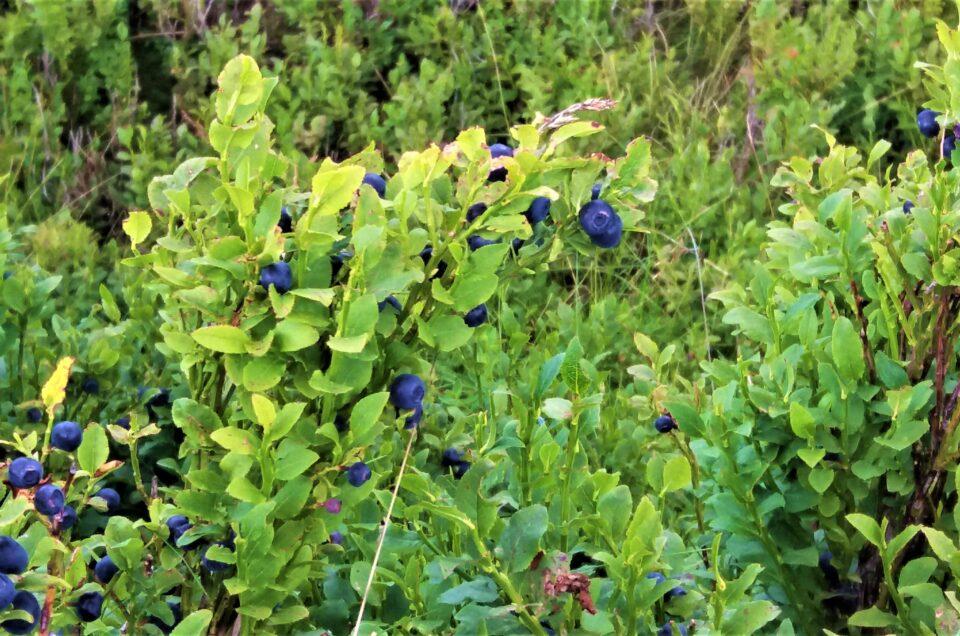 Значення вітамінів та мікроелементів у горах.