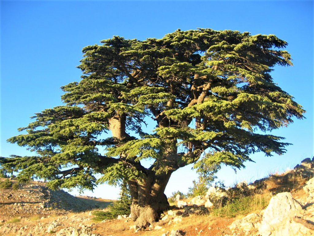 Топ-7 місць Лівану, які варто відвідати.